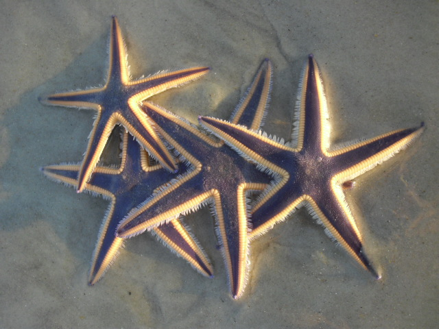 Crescent Beach FL Hotels Starfish