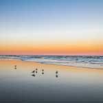 Beach Birds at Beacher's Lodge