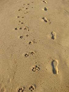 Pet Friendly Hotels in St Augustine Dog Prints in Sand