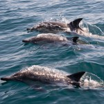 Things to do in St Augustine Dolphin Viewing