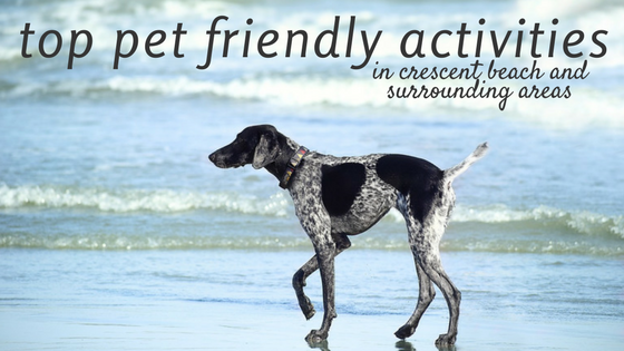 top pet friendly activities