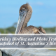 Florida's Birding and Photo Fest